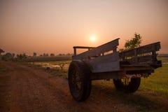 Поля во время сезона риса Стоковое фото RF