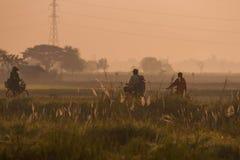 Поля во время сезона риса Стоковая Фотография RF