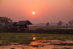 Поля во время сезона риса Стоковые Изображения RF