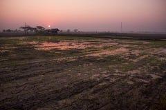 Поля во время сезона риса Стоковое Фото