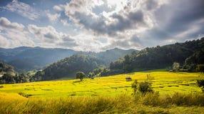 Поля горы Таиланда золота Стоковые Изображения