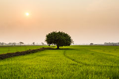 Поля дерева. Стоковое фото RF