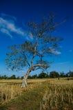 Поля дерева Стоковые Изображения RF