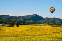 Поля желтых цветков с воздушным шаром Стоковая Фотография