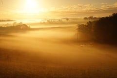 Поля завальцовки покрытые туманом утра Стоковая Фотография