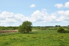 поля зеленеют над взглядом Стоковое Фото