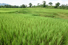 Поля зеленого цвета Стоковая Фотография RF