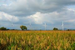 Поля и ветротурбины риса Стоковые Фото