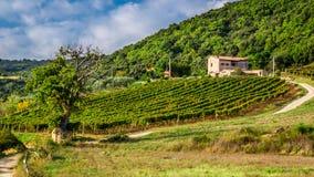 Поля и виноградники в сельской местности, Тоскане Стоковые Фото
