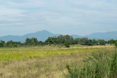 Поля и горы с голубым небом Стоковое Изображение RF