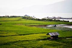 Поля и озера риса Стоковая Фотография