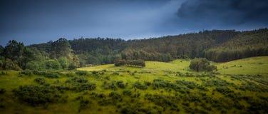 Поля и холмы молодого лебедя Стоковое фото RF