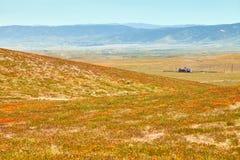 Поля мака Калифорнии во время времени пика зацветая, запаса мака Калифорнии долины антилопы Стоковое Изображение RF