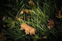 Поля, осень и цвета Стоковые Изображения RF