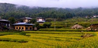 Поля риса Бутана, долина сентябрь 2015 Paro стоковые изображения rf