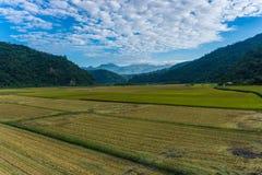Поля риса восточной Восточно-африканской зоны разломов стоковые изображения rf