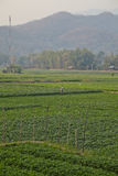 Поля риса в горах Таиланда Стоковое Фото