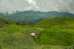 Поля риса в горах Стоковая Фотография