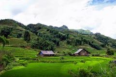Поля риса в деревне Sapa, Вьетнаме Стоковые Изображения RF
