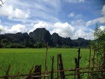 Поля риса в Лаосе Стоковая Фотография