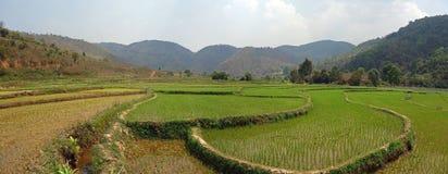 Поля риса в Мьянме Стоковое фото RF