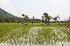 Поля риса в острове Ява Стоковое фото RF