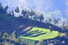 Поля риса Зона Эвереста, Непал Стоковые Изображения