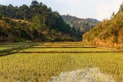 поля риса и тропический лес, Мадагаскар Стоковая Фотография RF