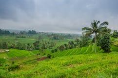 поля риса с дождевыми облако Стоковая Фотография