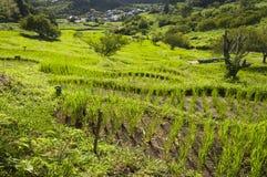 Поля риса террасы в Kikugawa, Японии Стоковые Изображения RF