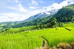 Поля риса террасы стоковые фотографии rf