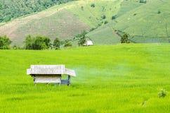 Поля риса террасы стоковые изображения