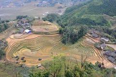 Поля риса PA Sa Вьетнам Стоковая Фотография