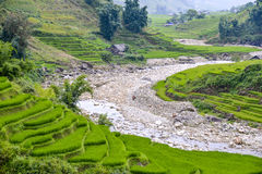 Поля риса PA Sa в Вьетнаме стоковые изображения