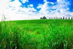 Поля сахарного тростника в Гаваи Стоковое Изображение RF