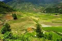 Поля террасы риса в Вьетнаме Стоковая Фотография RF