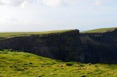 Поля травы окружая ` s скалы Moher Стоковые Изображения RF