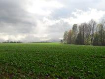Поля тумана Стоковая Фотография RF