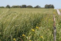 Поля урожая Стоковая Фотография RF