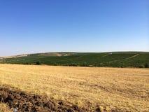 Поля фермера Стоковые Фото