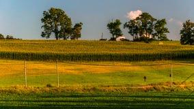Поля фермы вдоль проселочной дороги в York County, PA. Стоковая Фотография