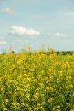 Поля Франции желтого цвета стоковое фото