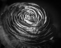 Поля цветка в Карлсбаде Стоковое Изображение