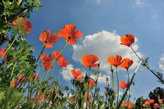 Поля цветков Стоковые Изображения