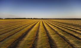 Поля льна в Нормандии, Франции Стоковое Изображение RF