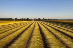 Поля льна в Нормандии, Франции Стоковое Изображение