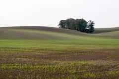 Поля Moravian волнистые Стоковая Фотография RF