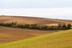 Поля Moravian волнистые Стоковые Фотографии RF