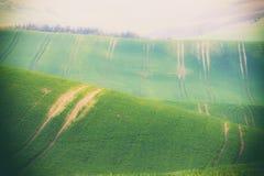 Поля Rolling Hills и зеленой травы Стоковое Изображение