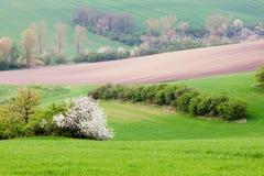Поля Rolling Hills и зеленой травы Стоковая Фотография